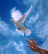 When doves fly